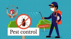 Termite and Rodent Exterminator Virginia Beach Info Graph